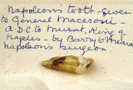 Napoleon's upper right permanent canine tooth