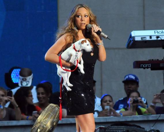 Pop diva Mariah Carey owns four Jack Russell Terriers named Cha-Cha, Jackie Lambchops, JJ and Dolomite.
