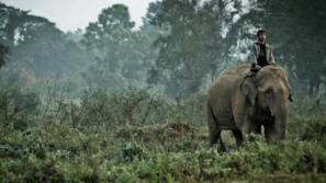 Thailand's Anantara hotels brews Elephant Dung Coffee for $50 a Cup
