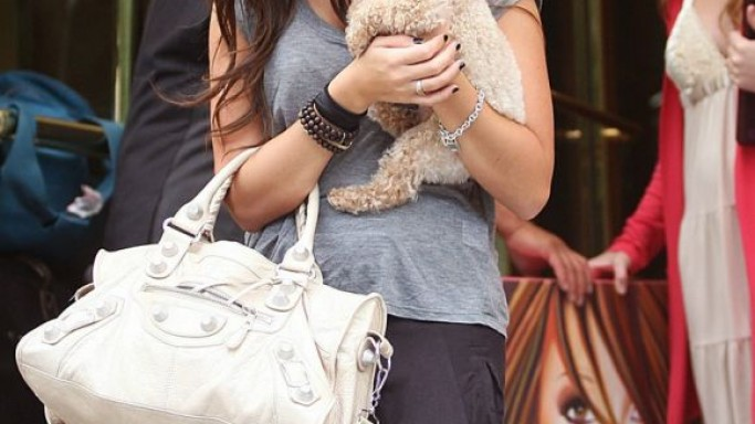Ashley Tisdale's Dog