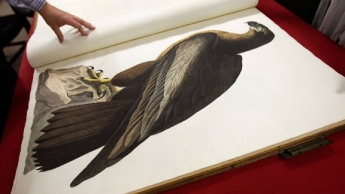 Birds of America: The Most Expensive Book In the World $10 Million