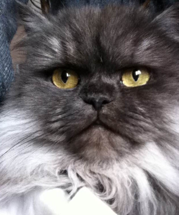 Cheapest Shipping From Usa To Uk >> 5 Most Expensive Cats in the World - Bornrich