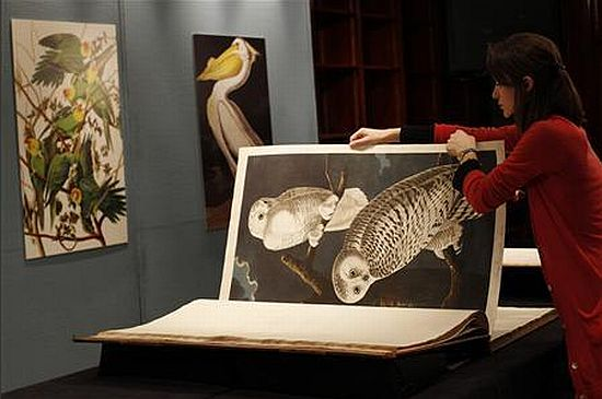 The Birds of America book on display