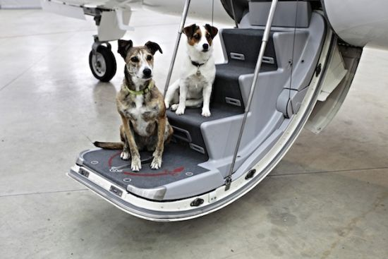 Victor's Furs Class service puts pets on jets