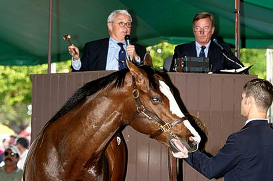 Most expensive horse: Florida-born Colt