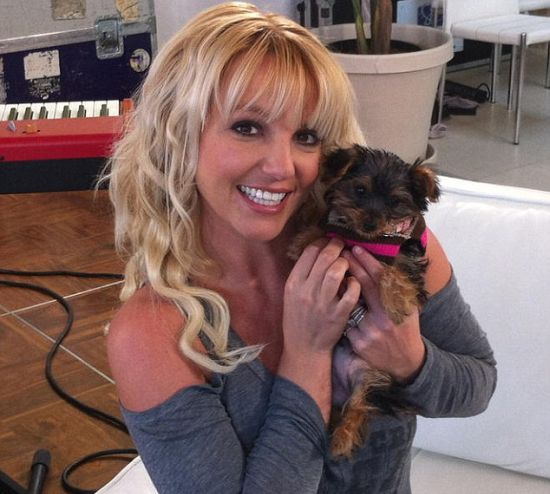 Britney Spears Puppy