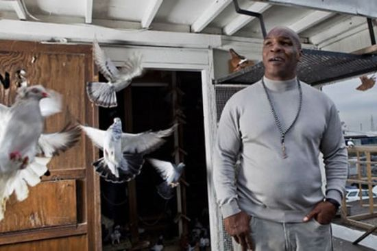 Mike Tyson's Pigeons