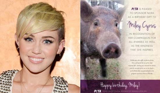 Miley Cyrus's Pig
