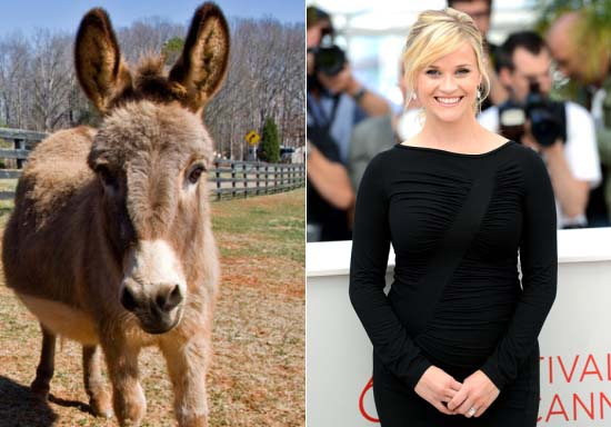 Reese Witherspoon's Donkey