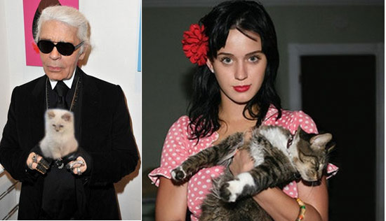 Celebrity Cat Owners