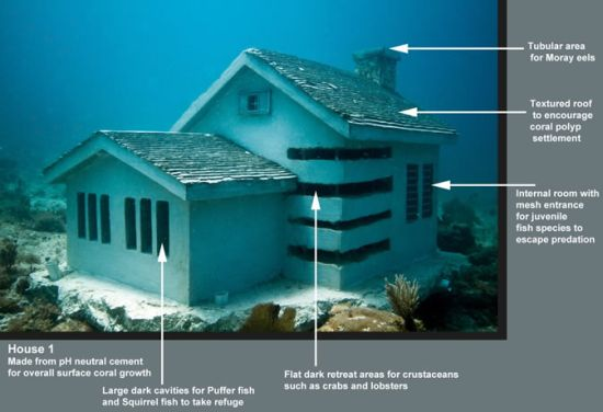 Urban Reef: Suburban homes for tropical fish